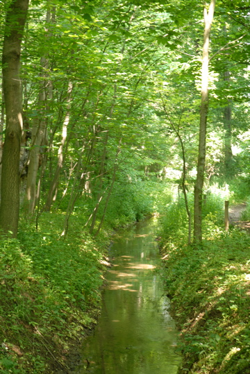 Auwald-Landschaft am Mühlbach